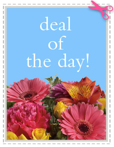 Deal of the Day in Marcellus NY, Blooming Gals Bouquets & Gifts